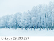 Купить «Winter landscape in cold tones - row of winter frosty trees in the winter park in cloudy day», фото № 29393297, снято 11 декабря 2017 г. (c) Зезелина Марина / Фотобанк Лори