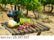 Red wine, cheese and grapes against vineyard. Стоковое фото, фотограф Яков Филимонов / Фотобанк Лори