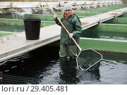 Купить «Female standing in fish tank fishing for sturgeon with landing net», фото № 29405481, снято 4 февраля 2018 г. (c) Яков Филимонов / Фотобанк Лори