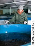 Купить «Woman examining young sturgeon on fish farm», фото № 29405521, снято 4 февраля 2018 г. (c) Яков Филимонов / Фотобанк Лори