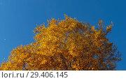 Купить «Autumn trees with yellowing leaves against the sky», видеоролик № 29406145, снято 29 сентября 2018 г. (c) Игорь Жоров / Фотобанк Лори