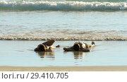 Купить «Young couple lying on sand on the beach», видеоролик № 29410705, снято 12 ноября 2017 г. (c) Игорь Жоров / Фотобанк Лори