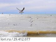 Купить «Чайки над морем», эксклюзивное фото № 29412077, снято 15 марта 2012 г. (c) Юрий Морозов / Фотобанк Лори