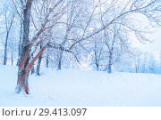 Купить «Winter landscape - frosty trees in winter forest in the sunny morning. Winter landscape with snowy winter trees», фото № 29413097, снято 11 декабря 2017 г. (c) Зезелина Марина / Фотобанк Лори