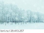 Купить «Winter landscape in cold tones - row of winter frosty trees in the park», фото № 29413257, снято 11 декабря 2017 г. (c) Зезелина Марина / Фотобанк Лори