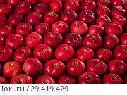 Купить «Apples mac in the water droplets. The background image», фото № 29419429, снято 23 октября 2018 г. (c) Сергей Молодиков / Фотобанк Лори
