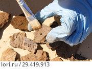 Купить «Первичная обработка археологической находки кистью», фото № 29419913, снято 6 июля 2018 г. (c) Круглов Олег / Фотобанк Лори