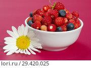 Купить «Фарфоровая миска с ягодами земляники и черники на малиновом фоне крупным планом», фото № 29420025, снято 22 июня 2018 г. (c) Елена Коромыслова / Фотобанк Лори