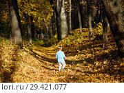 Купить «Маленький мальчик гуляет по осеннему лесу», эксклюзивное фото № 29421077, снято 20 сентября 2018 г. (c) Игорь Низов / Фотобанк Лори