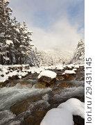 Купить «Fast mountain river and beautiful snowy forest after a snowfall. Winter landscape», фото № 29431145, снято 30 октября 2011 г. (c) Виктория Катьянова / Фотобанк Лори