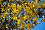 Купить «Осенняя листва», эксклюзивное фото № 29432701, снято 12 октября 2018 г. (c) Литвяк Игорь / Фотобанк Лори