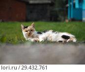 Купить «The cat is lying in the green grass. Animal basking in the sun», фото № 29432761, снято 16 ноября 2018 г. (c) Ирина Козорог / Фотобанк Лори