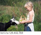 Купить «Funny cute baby feeding a goat. Girl treats animal», фото № 29432769, снято 16 ноября 2018 г. (c) Ирина Козорог / Фотобанк Лори