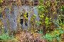 Купить «Заброшенный одноэтажный дом в зарослях на бывшей улице в Чернобыле, зона отчуждения ЧАЭС, Украина», фото № 29437769, снято 11 ноября 2018 г. (c) Ольга Коцюба / Фотобанк Лори