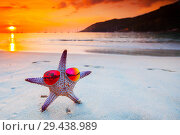 Купить «Starfish in sunglasses on sea beach», фото № 29438989, снято 7 января 2016 г. (c) Иван Михайлов / Фотобанк Лори