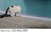 Купить «white Adult cat is by the pool», видеоролик № 29442089, снято 3 ноября 2018 г. (c) Володина Ольга / Фотобанк Лори