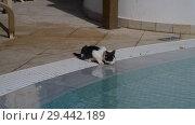 Купить «Kitten drink water from the pool outside», видеоролик № 29442189, снято 3 ноября 2018 г. (c) Володина Ольга / Фотобанк Лори