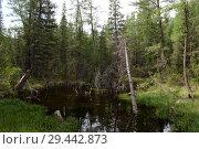 Таёжный пейзаж около села Акташ, Улаганский район, Республика Алтай, Сибирь, Россия. Стоковое фото, фотограф Free Wind / Фотобанк Лори
