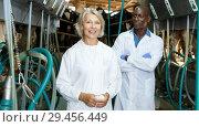 Купить «Two farm milkmaids male and female standing near modern cow milking machines», фото № 29456449, снято 8 августа 2018 г. (c) Яков Филимонов / Фотобанк Лори