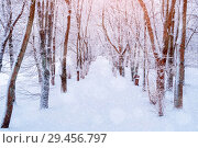 Купить «Winter Christmas landscape. Snowy trees along the winter park alley. Winter snowy scene», фото № 29456797, снято 11 декабря 2017 г. (c) Зезелина Марина / Фотобанк Лори