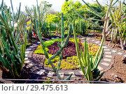Купить «Фуншал. Мадейра. Португалия. Ботанический сад», фото № 29475613, снято 6 декабря 2013 г. (c) Галина Савина / Фотобанк Лори