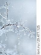 Купить «Ветка во льду. Зимний фон», фото № 29477125, снято 11 ноября 2016 г. (c) Татьяна Белова / Фотобанк Лори