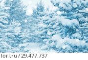 Купить «Winter background with snow-covered coniferous forest», фото № 29477737, снято 20 ноября 2018 г. (c) Икан Леонид / Фотобанк Лори