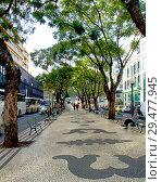 Купить «Фуншал. Мадейра. Бульвар.», фото № 29477945, снято 6 декабря 2013 г. (c) Галина Савина / Фотобанк Лори