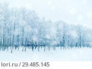 Купить «Winter landscape in cold tones - row of winter frosty trees in the park», фото № 29485145, снято 11 декабря 2017 г. (c) Зезелина Марина / Фотобанк Лори