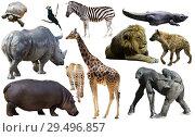 Купить «Collage with African mammals and birds», фото № 29496857, снято 22 января 2019 г. (c) Яков Филимонов / Фотобанк Лори