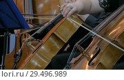 Woman and man playing cello. Стоковое видео, видеограф Aleksey Popov / Фотобанк Лори