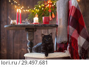 Купить «black cat on chair with wooden table with Christmas decoration», фото № 29497681, снято 26 ноября 2018 г. (c) Майя Крученкова / Фотобанк Лори