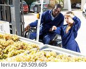Купить «Engineers checking delivered grapes harvest», фото № 29509605, снято 12 сентября 2018 г. (c) Яков Филимонов / Фотобанк Лори