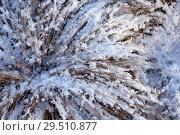 Купить «Grass under snow», фото № 29510877, снято 29 октября 2018 г. (c) Stockphoto / Фотобанк Лори