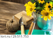 Купить «Gardening. Hobby. Planting and replanting plants. A bouquet of yellow bright garden flowers in a steel bucket and garden tools on a wooden background in rustic style with a copy space», фото № 29511753, снято 9 сентября 2018 г. (c) Светлана Евграфова / Фотобанк Лори