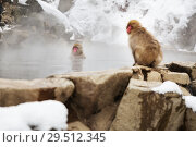 Купить «japanese macaques or snow monkeys in hot spring», фото № 29512345, снято 7 февраля 2018 г. (c) Syda Productions / Фотобанк Лори