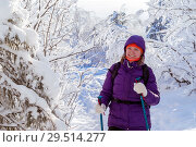 Young attractive woman walking in a snowy winter forest with trekking poles. Стоковое фото, фотограф Евгений Харитонов / Фотобанк Лори
