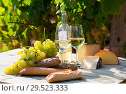 Купить «Wine, cheese, grape on vineyard background», фото № 29523333, снято 21 марта 2019 г. (c) Яков Филимонов / Фотобанк Лори