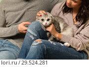 Купить «close up of couple with scottish fold cat», фото № 29524281, снято 13 января 2018 г. (c) Syda Productions / Фотобанк Лори