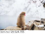 Купить «japanese macaque or snow monkey in hot spring», фото № 29524705, снято 8 февраля 2018 г. (c) Syda Productions / Фотобанк Лори