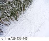 Купить «Вид сверху на заснеженный пляж и сосновый бор в зимнее время года», фото № 29536445, снято 21 января 2018 г. (c) Кекяляйнен Андрей / Фотобанк Лори
