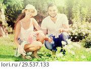 Купить «Happy family seedling garden plants», фото № 29537133, снято 19 марта 2019 г. (c) Яков Филимонов / Фотобанк Лори