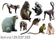 Купить «set of primates», фото № 29537333, снято 23 апреля 2019 г. (c) Яков Филимонов / Фотобанк Лори
