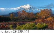 Купить «Picturesque volcanic landscape, view of rocky cone volcano, yellow-orange forest», видеоролик № 29539441, снято 29 сентября 2018 г. (c) А. А. Пирагис / Фотобанк Лори