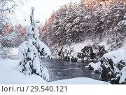 Купить «Зимний пейзаж с заснеженной елкой и руслом реки в скалистых берегах», фото № 29540121, снято 23 декабря 2014 г. (c) Кекяляйнен Андрей / Фотобанк Лори