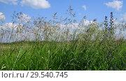 Купить «Beautiful field grass against sky in Russia», видеоролик № 29540745, снято 20 июня 2018 г. (c) Володина Ольга / Фотобанк Лори