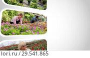 Купить «Looping video of farmers working in greenhouse farm and nobody plants», видеоролик № 29541865, снято 28 октября 2018 г. (c) Яков Филимонов / Фотобанк Лори