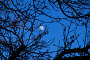Купить «Goodbye day. Hello night. Vague Moon looking at Earth through the bare tree branches», фото № 29545221, снято 17 апреля 2016 г. (c) Вадим Роднев / Фотобанк Лори