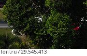 Купить «Airplane taxiing after landing», видеоролик № 29545413, снято 29 ноября 2018 г. (c) Игорь Жоров / Фотобанк Лори