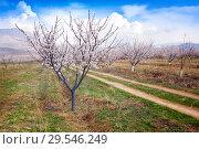 Купить «Apricot farm during sping season against Vayk mountain range, Vayots Dzor Province», фото № 29546249, снято 16 марта 2018 г. (c) Papoyan Irina / Фотобанк Лори
